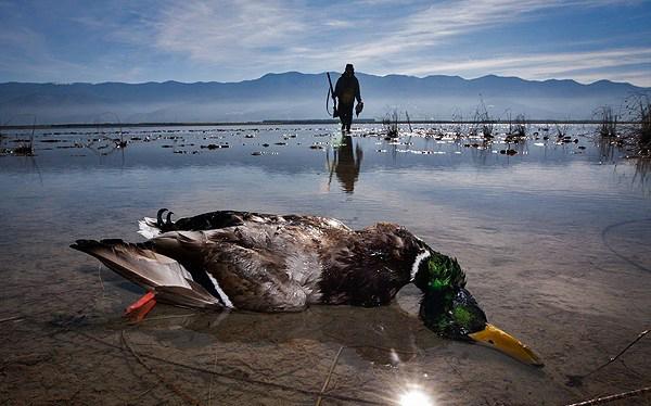فریدونکنار همچنان قتلگاه پرندگان مهاجر