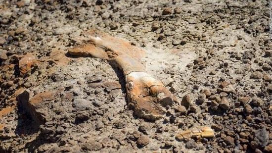 فسیل ۶۹ میلیون ساله توسط یک پسربچه کشف شد