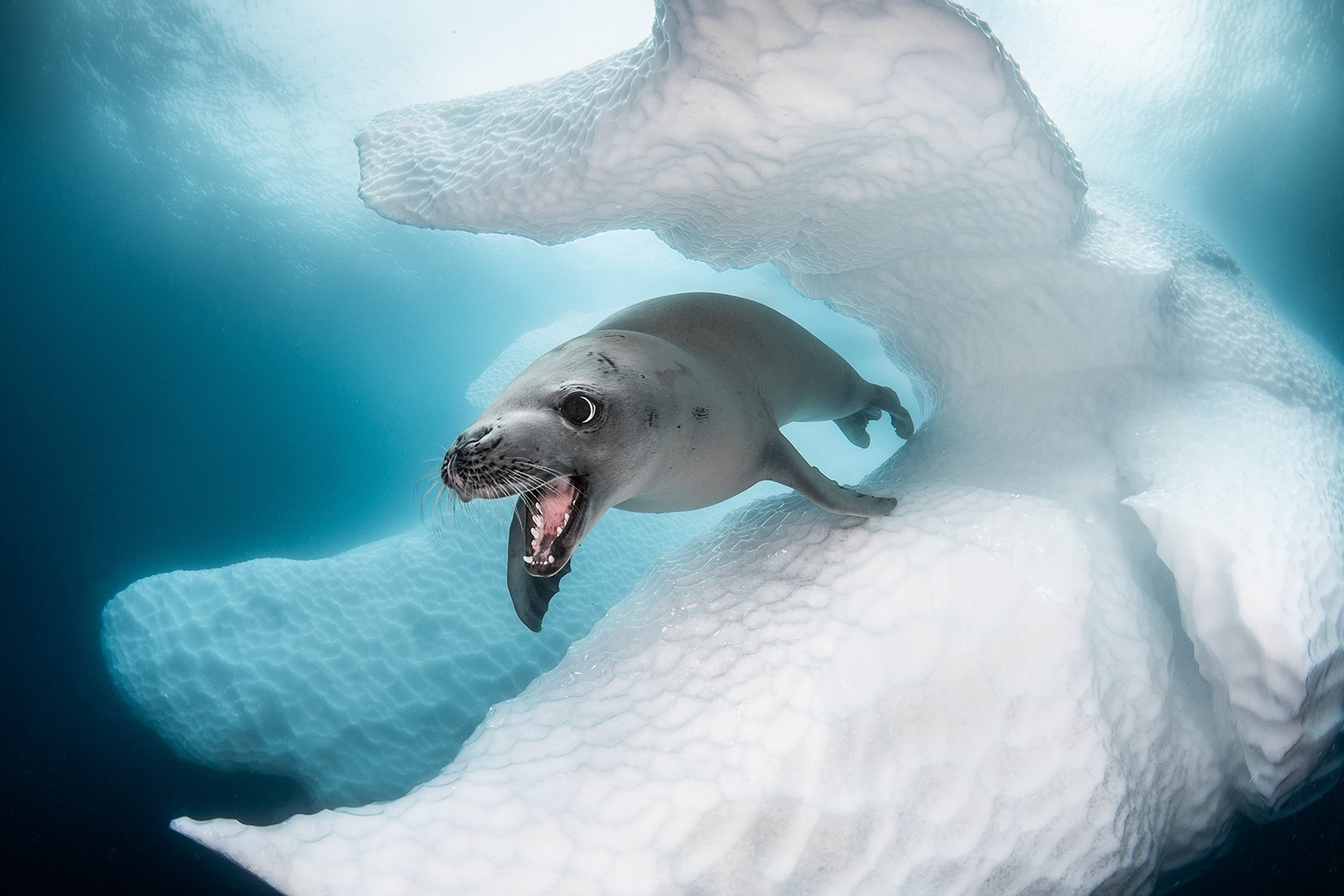 تصاویر منتخب از مسابقه عکاسی هنری در اقیانوس