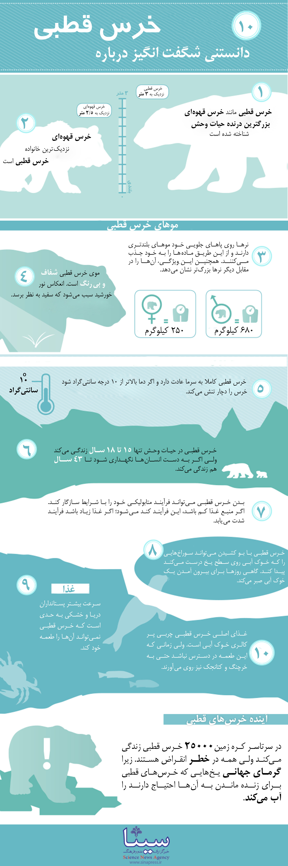 اینفوگرافی خرس قطبی